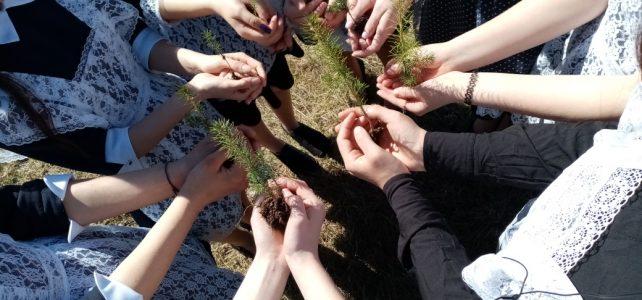 Участие в акции «Сад памяти»